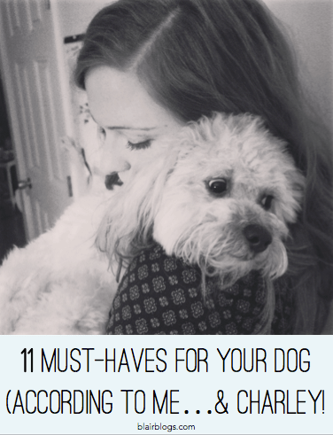 11 Must-Haves for Your Dog (according to me & Charley) | Blairblogs.com