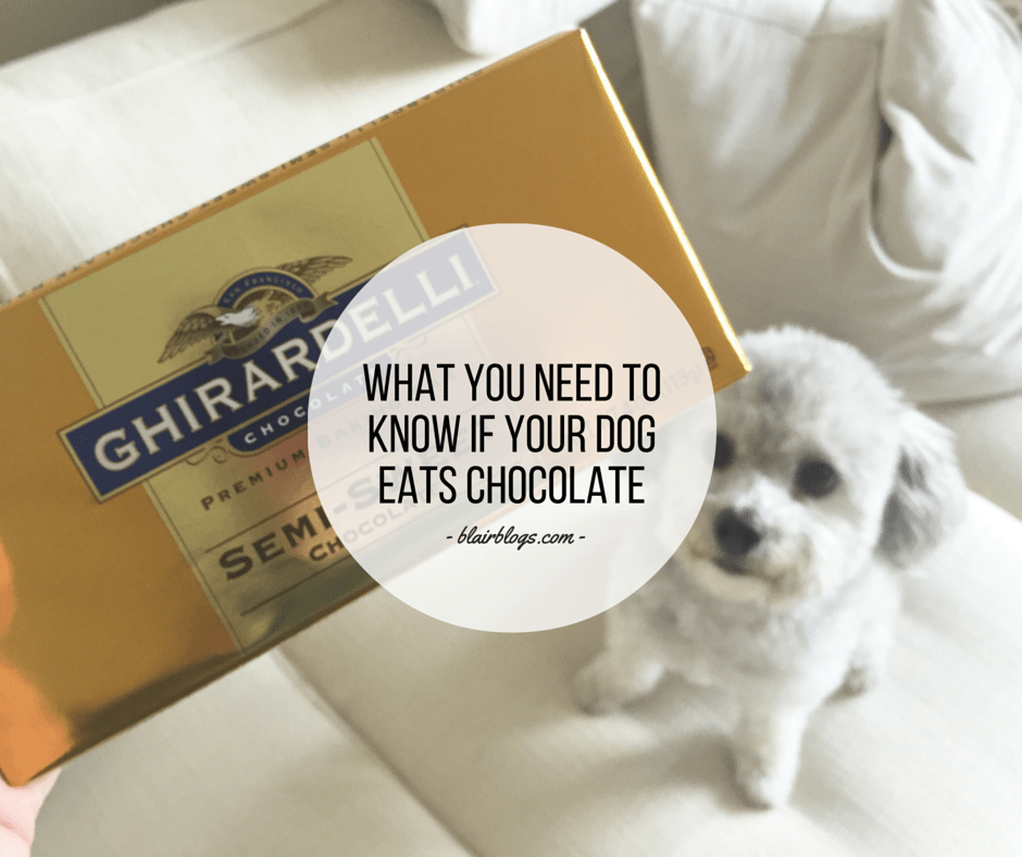 What You Need To Know If Your Dog Eats Chocolate  BlairBlogs.com
