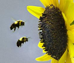 september-bees