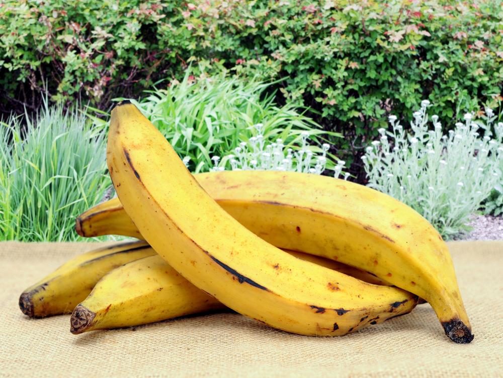 Bananes plantain jaunes
