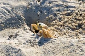 Le crabe, la star du weekend de pâques