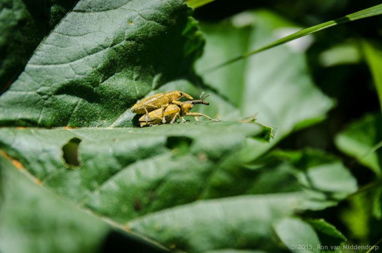 photo: insects