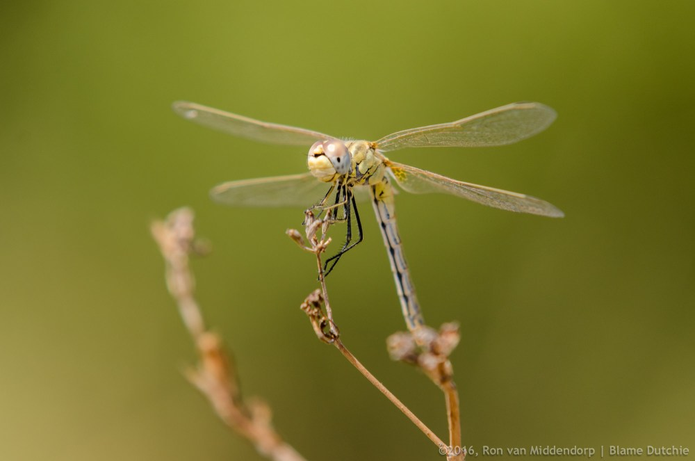 photo: awesome insects
