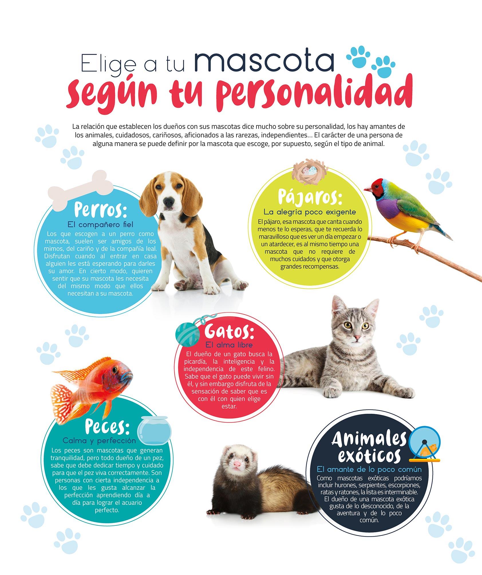 mascotas-personalidad