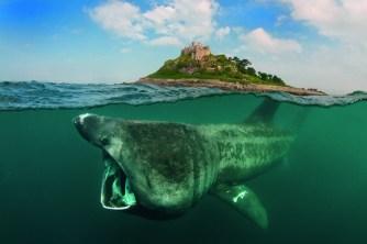 Basking shark at St Michael's Mount (manipulated image).