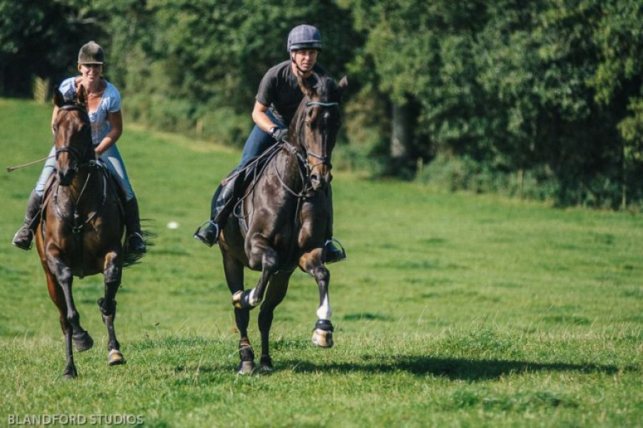 Dorset Equine and Horse Photographer