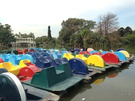 Paddle boats for rent in the park