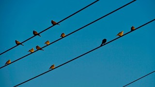 birds power lines
