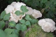 2014 Fungi at Greenhall by Andy Bain
