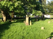 2014 High Blantyre Kirkyard in May