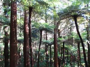 Trees in Wellington, New Zealand