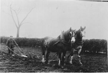 1930s James Marshall Ploughing. Shared by Jim Cochrane