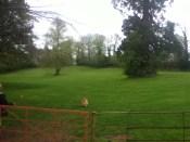 2011 April Greenhall Park (by PV)