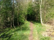 2014 Woodland Track off Pech Brae (PV)