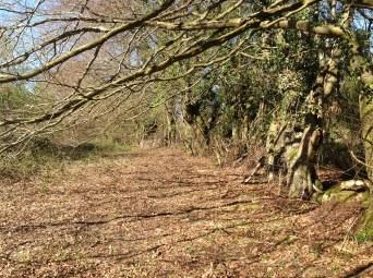 2014 Medieval Path, Blantyre (PV)