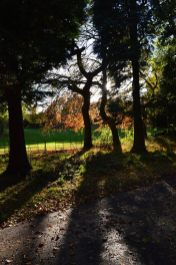 2014 Greenhall Autumn Colours Oct by Andy Bain