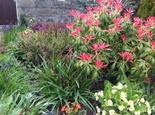 2103 Garden at Croftfoot (PV)