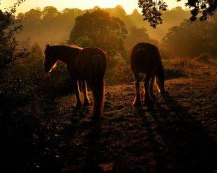 Horses at Calder Oct 2015 by Jim Brown