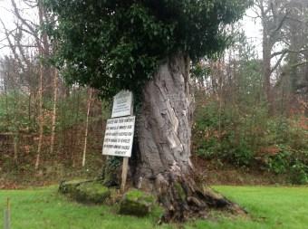 2014 Large tree at Calderglen Estate (PV)