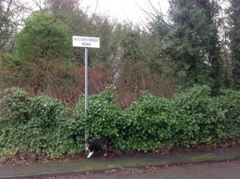 2015 Auchentibber Road, corner of Sydes Brae (PV)