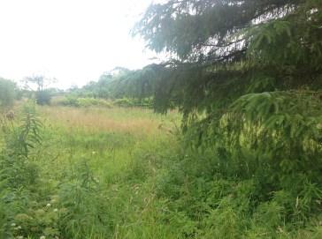 Brown's Land Allotments, Auchentibber Aug 2015 (PV)