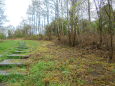 2015 Woodland Paths Barnhill vegetation clearance