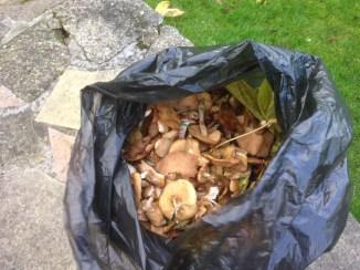 2015 Mushrooms at Kirkton (PV)