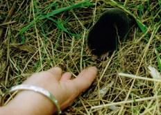 2000 Milheugh mole