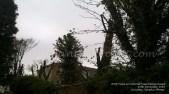 2016 Lomond View Trees