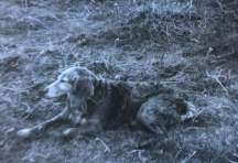 1950 Rover, Elizabeth Weavers dog
