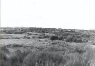 1979 Craighead Bing (PV)