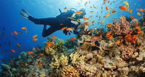 170202-coral-reef-mn-1055_4efac07fd3b4ea7a1f52c7690784e11a.fit-760w