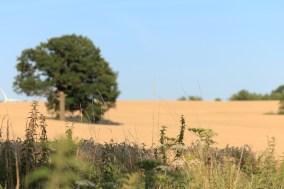 Natur Feld Getreide