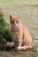 Natur Tiere Katzen Rothaarig
