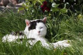 Natur Tiere Katzen weiß schwarz Mietzi