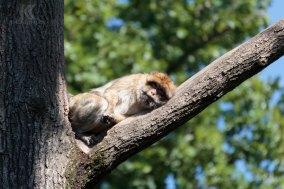 Zoo_Halle_Dahliengarten_Gera