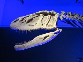 dinosaur bone blue
