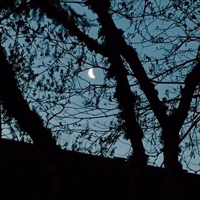 4/21: crescent moon love