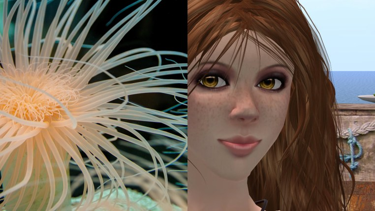 diptych of Vanessa Blaylock and a sea anemone