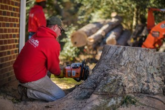 Cutting a stump and getting ready to grind: Blazer Tree Services, Richmond VA area