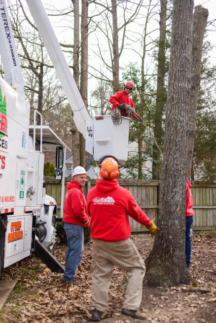 Tree trimming / tree pruning in a bucket truck: Blazer Tree Services, Richmond VA area