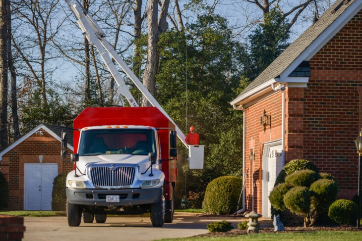 Tree care: Blazer Tree Services, Richmond VA area