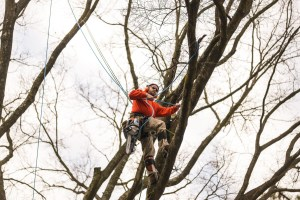 Tree trimming / tree pruning: Blazer Tree Services, Richmond VA area