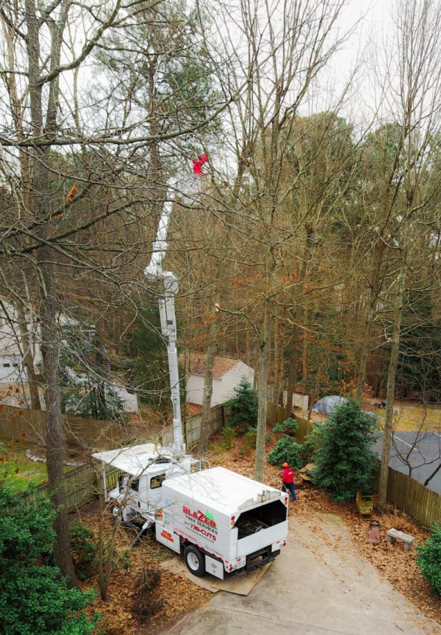 Tree trimming / tree pruning: Blazer Tree Services, Richmond VA area