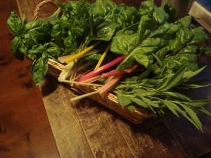 happy bounty from Spirit Fire's kitchen garden 2012