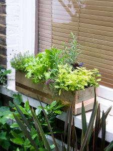 RX-DK-HTG28401_herbs-windowbox_s3x4_lg