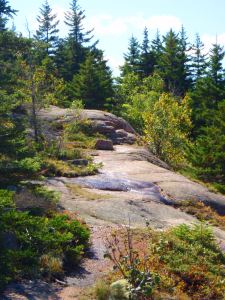 Rock Trail in Maine