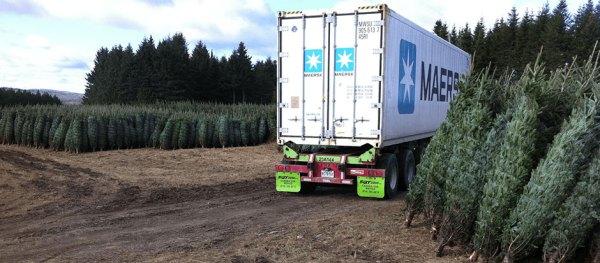Christmas Tree Containers Christmas Tree Farm