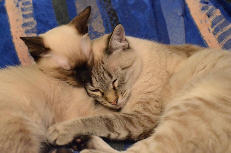 Maggy&Mowgli