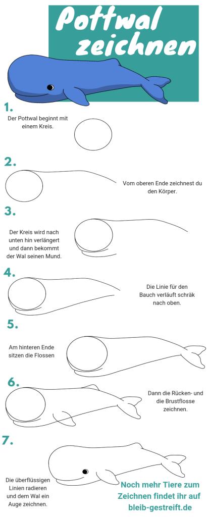 Wal zeichnen: Pottwal
